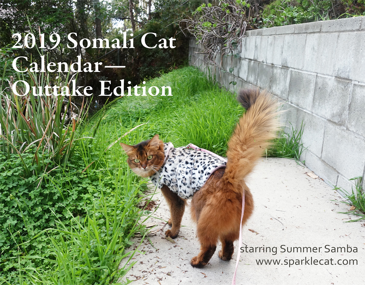 2019 somali cat calendar outtake edition featuring summer