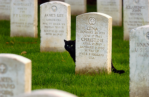 Black Cat in a Graveyard by Abe Kleinfeld