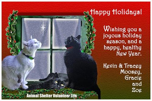 Animal Shelter Volunteer Life