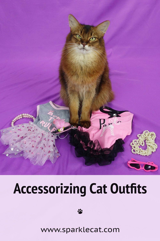 Accessorizing My Cat Fashion