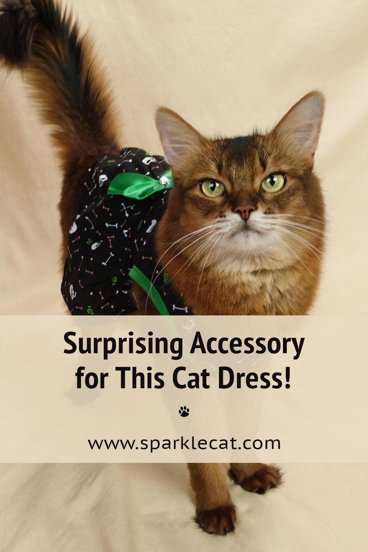 My New Cat Dress - and Fun Accessory