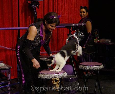 Acro-Cats, Samantha Martin, cat doing tricks, cat jumping through hoop