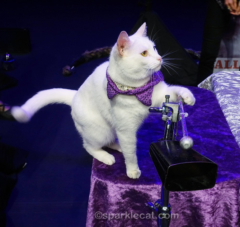 Acro-Cat playing cowbell