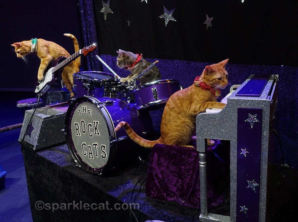 the Rock Cats at the Acro-Cats show
