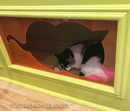 addison asleep in a cubby hole