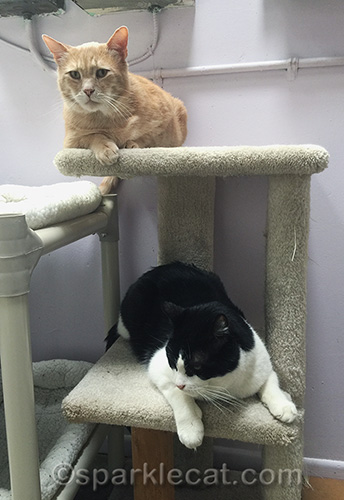 two adult cats at Kitten Rescue