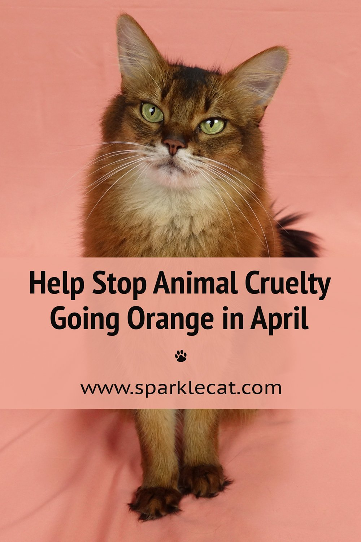I'm Going Orange to Raise Awareness About Animal Cruelty