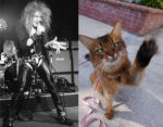 How Photographing Pets Is Like Photographing Rock Stars… and How It Isn't