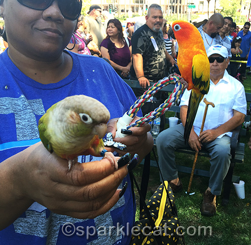 Parrots at the Blessing of the Animals at Olvera Street