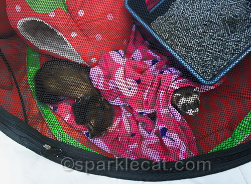 ferrets at the Blessing of the Animals at Olvera Street