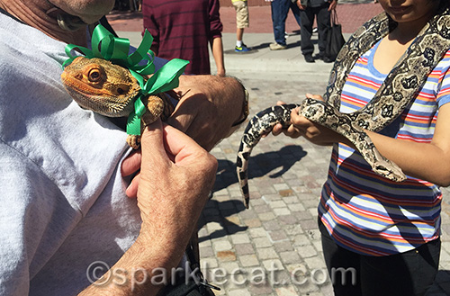A lizard and a boa constrictor at the Blessing of the Animals
