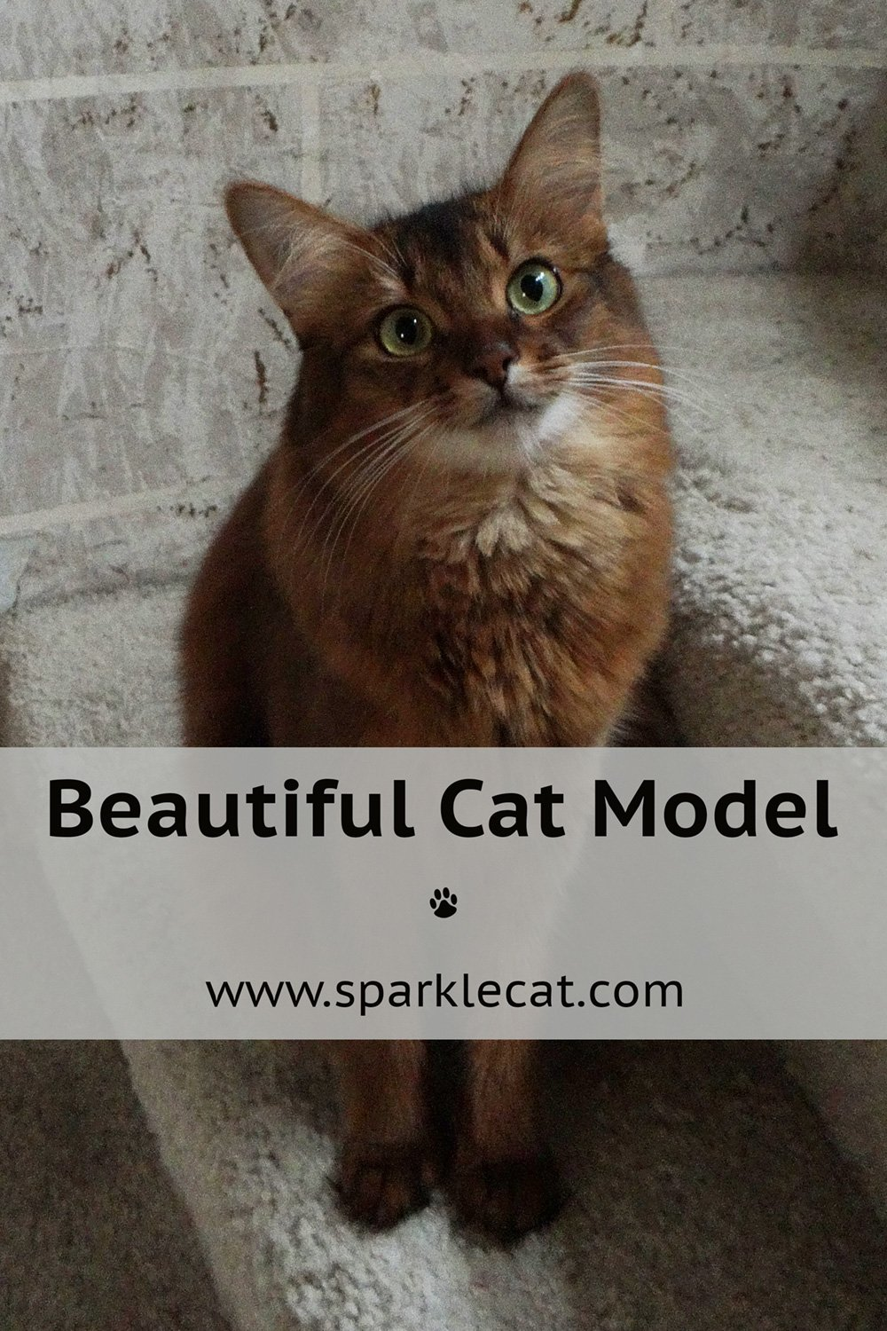 Learning to Be a Cat Model
