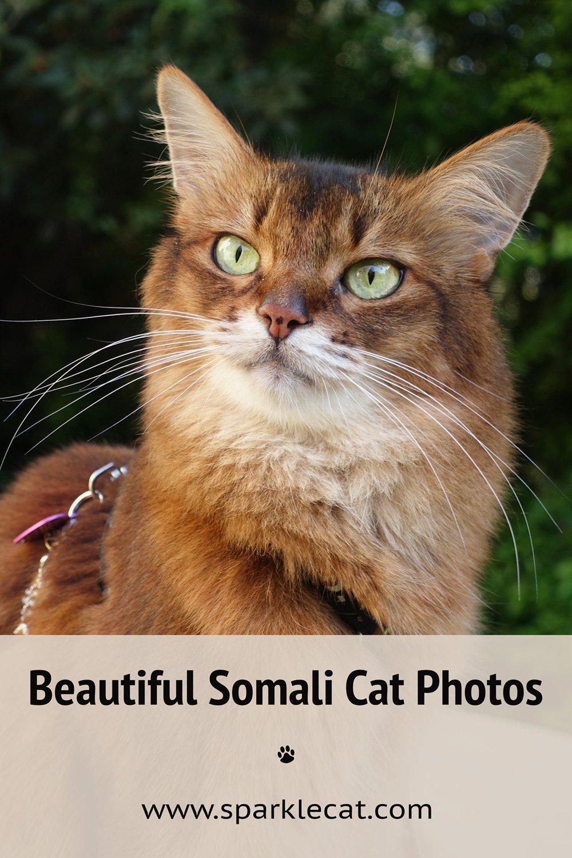 Cat-Casual Portraits