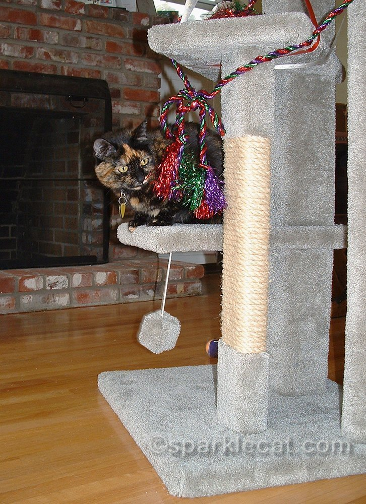 tortoiseshell cat on new cat tree wrapped in festive cord
