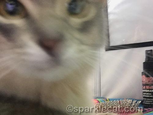 blurry selfie of somali kitten