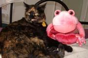 Binga and the hated frog