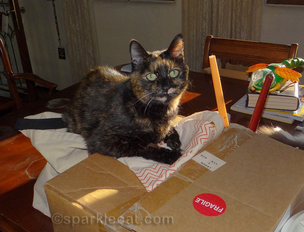 tortoiseshell cat posing with front paws on box on table