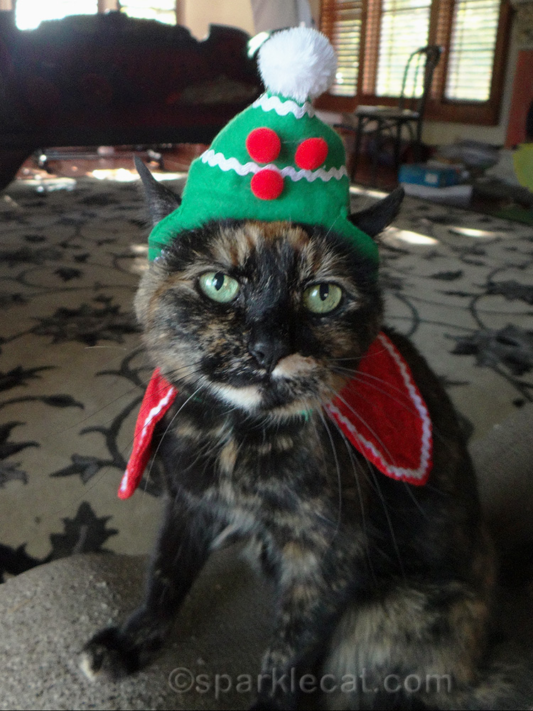 tortoiseshell cat wearing silly holiday hat