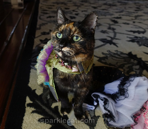 tortoiseshell cat posing in dress that doesn't fit