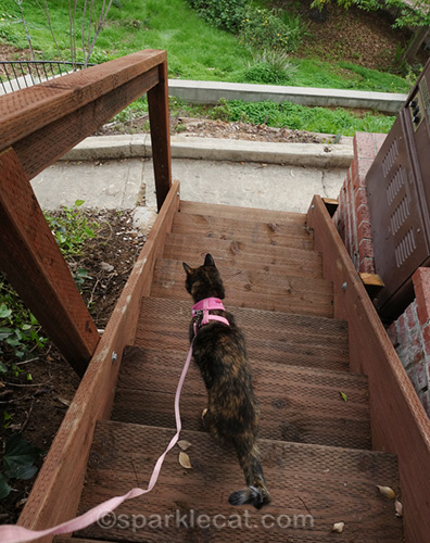 tortoiseshell cat goes down wood steps