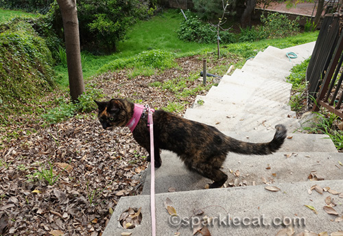 Binga explores the backyard