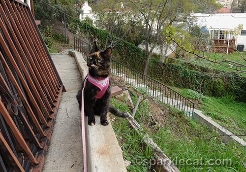 tortoiseshell cat in backyard