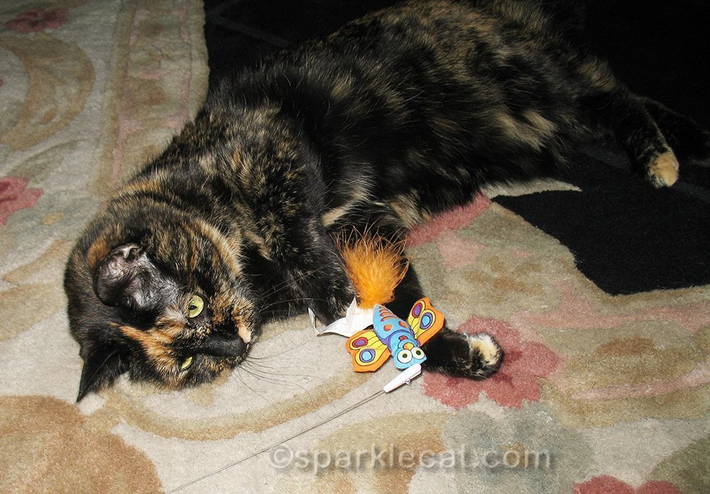 tortoiseshell cat playing with cat toy