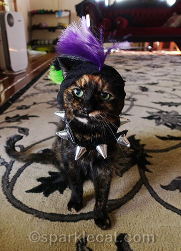 tortoiseshell cat in punk rock outfit