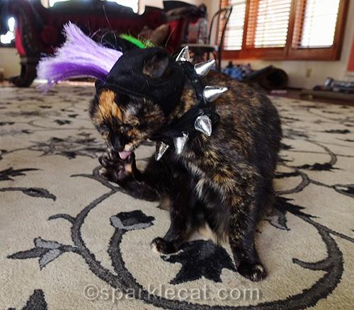 tortoiseshell cat acting punk rock