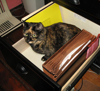 Maybe my human will shut the drawer and throw away the key