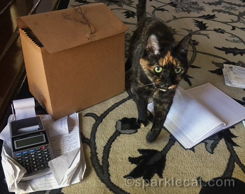 tortoiseshell cat walking all over tax paperwork