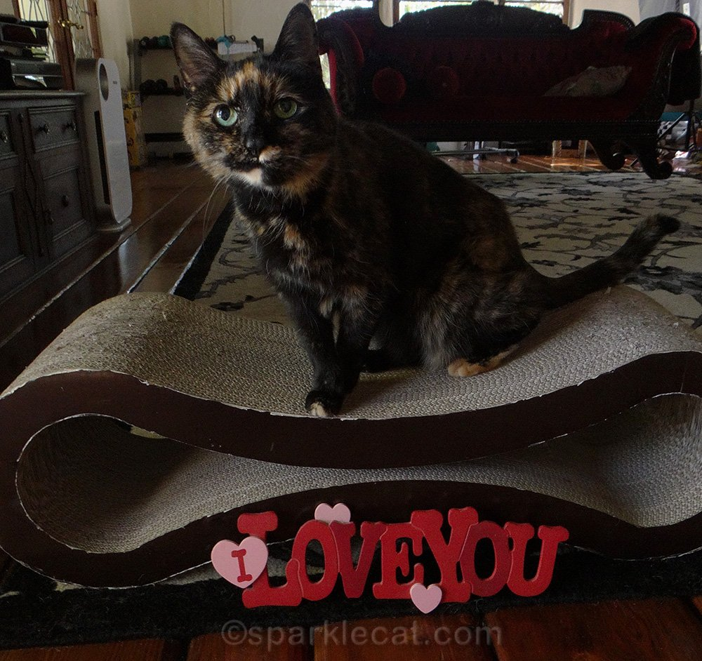 Tortoiseshell cat with I Love You prop