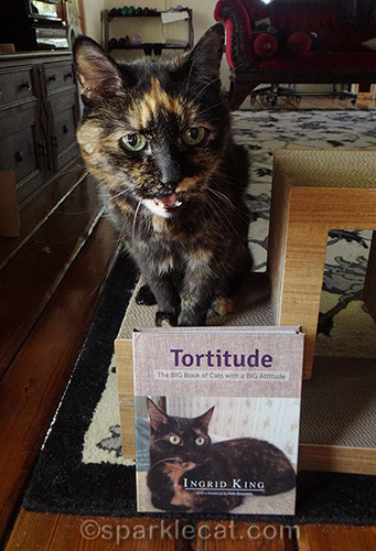 tortoiseshell cat meowing with Tortitude book