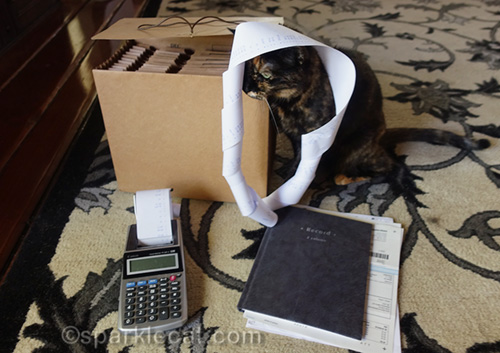 tortoiseshell cat messing around with tax return paperwork