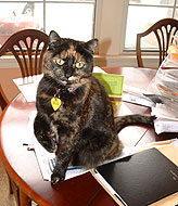 Binga not-so-politely sitting on some documents