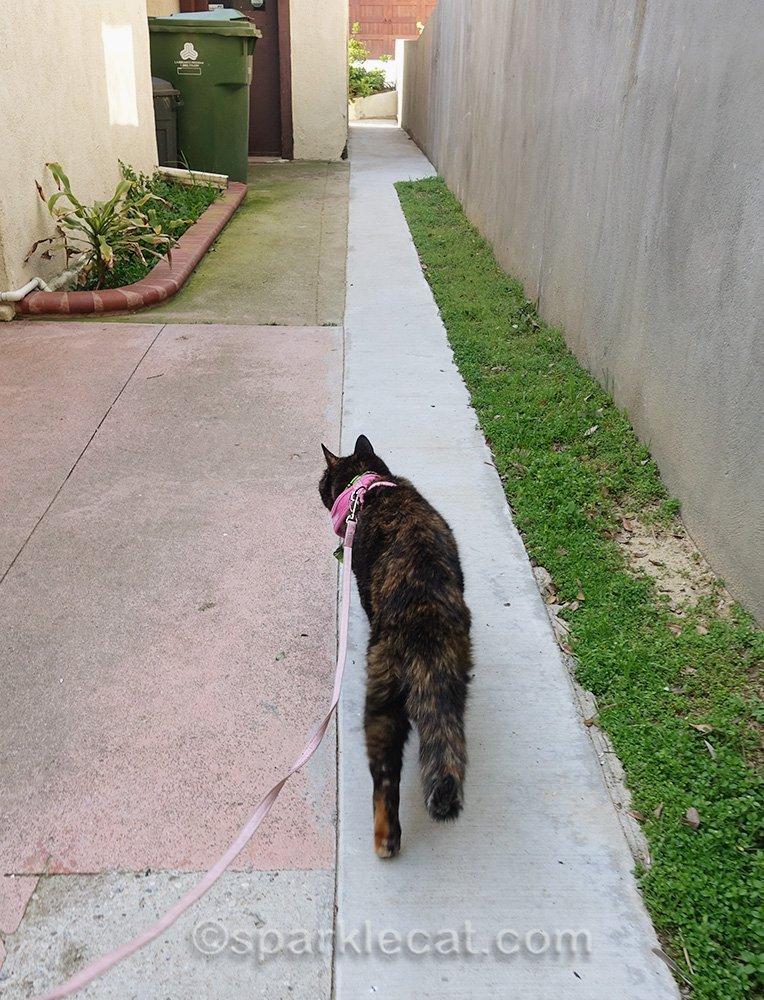 tortoiseshell cat strolling on walkway