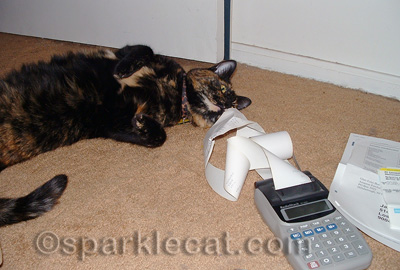 The calculator is a coveted cat toy!
