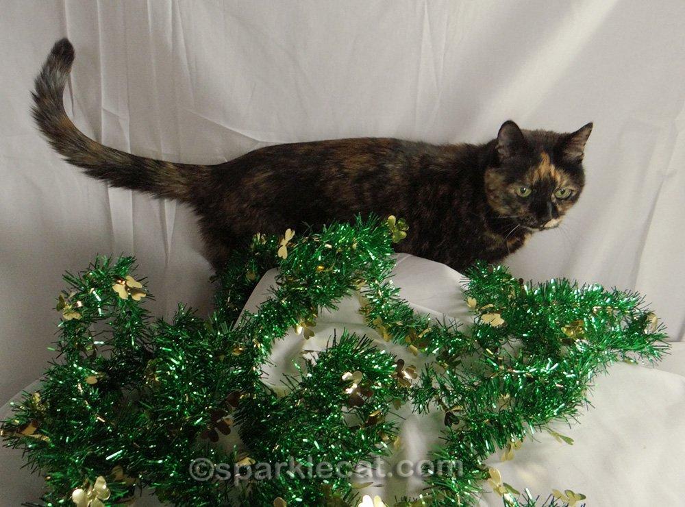 tortoiseshell cat invading St. Patrick's Day photo set