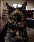 Ten Tortie Life Lessons From Binga