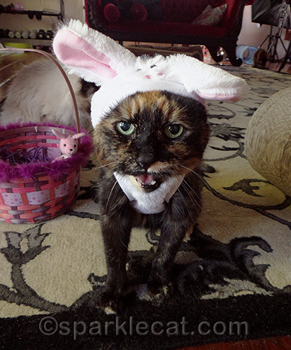 tortoiseshell cat unhappy about wearing bunny costume
