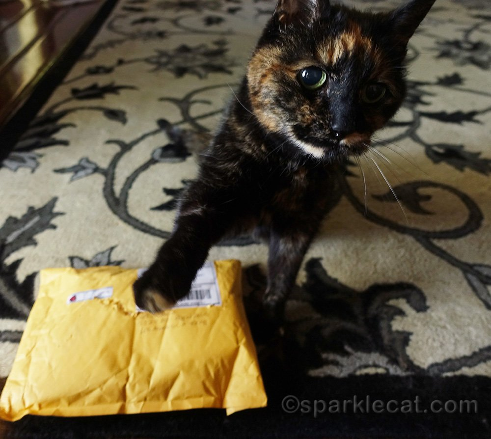 tortoiseshell cat with package