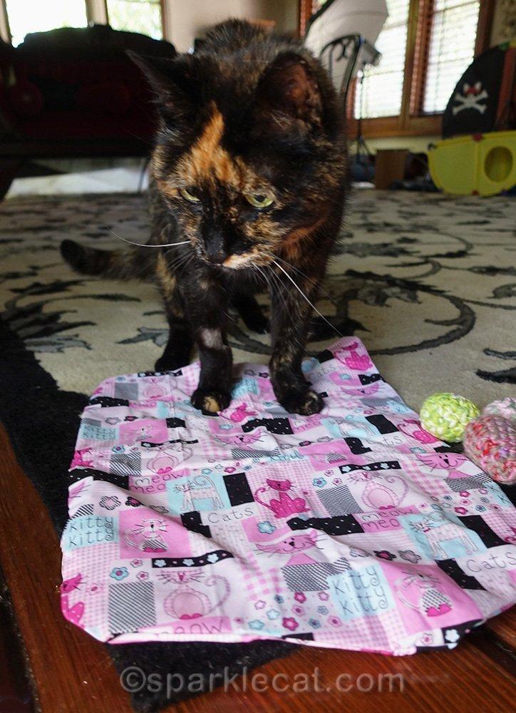 Binga with catnip mat and cat toys