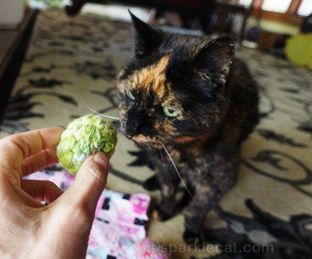 tortoiseshell cat with cat toy