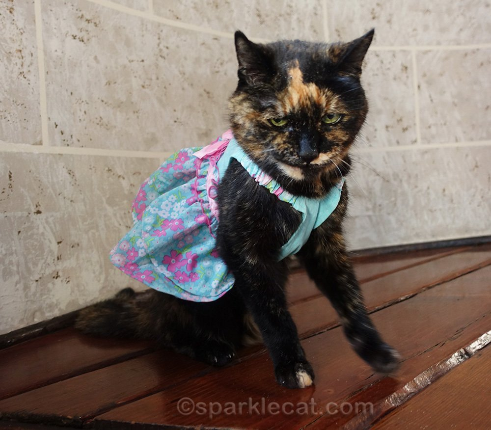 tortoiseshell cat wearing a dress and an evil expression