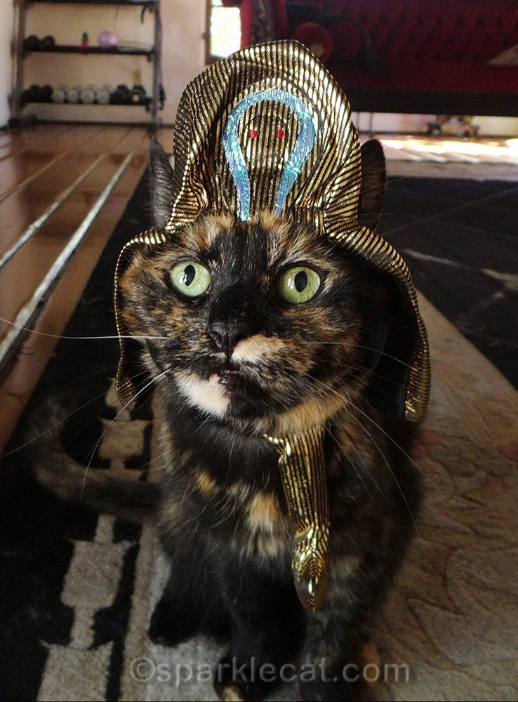 tortoiseshell cat wearing pharaoh's hat