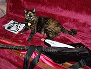 Unassuming bassist almost got bonus cat along with repair