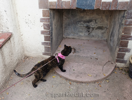 tortoiseshell cat checking out outdoor fireplace