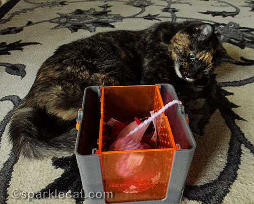 tortoiseshell cat playing with barely marinated toys in the Vault Marinater