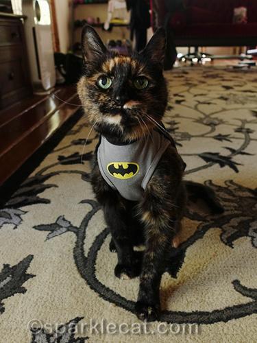 tortoiseshell cat in BatCat t-shirt