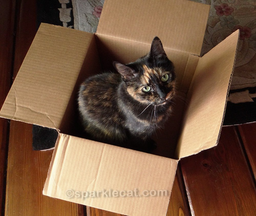 It's Tortoiseshell Cat Appreciation Day, so Binga's tortitude and tortie memories are on display.